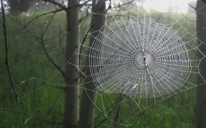 Spider Web Morning